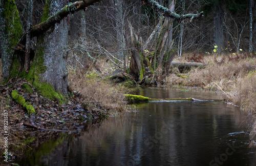 Tela Flowing creek in forest landscape