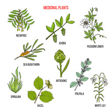 Medicinal Herbs Collection