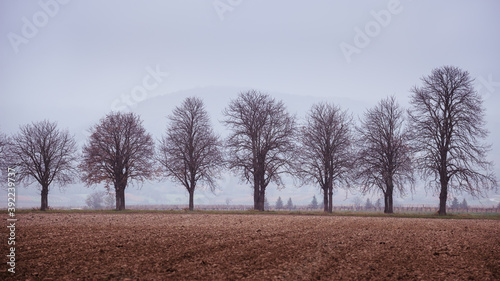 Naked trees in autumn on a field in Burgenland Fototapet