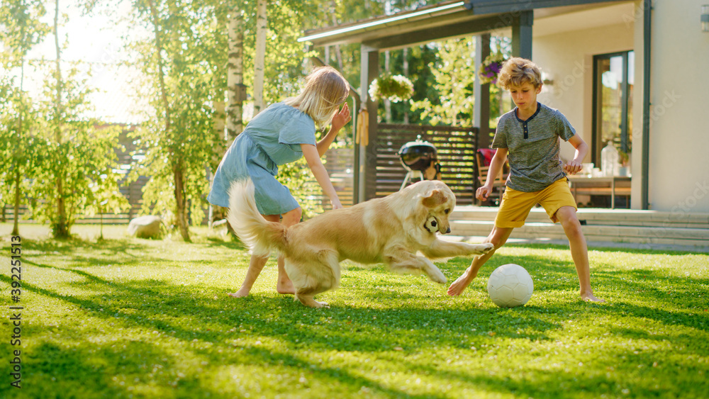 Fototapeta Two Kids Have fun with Their Handsome Golden Retriever Dog on the Backyard Lawn. They Pet, Play, Tackle it on the Ground And Scratch. Happy Dog Holds Toy Football in Jaws. Suburb House in the Summer