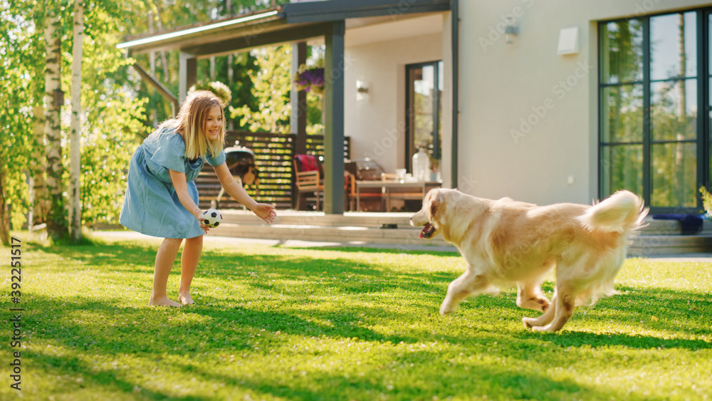 Fototapeta Cute Girl Has fun with Happy Golden Retriever Dog on the Backyard Lawn. She Pets, Play, Tackle it on the Ground And Scratches Stomach. Pedigree Dog Holds Toy Football in Jaws. Idyllic Summer House