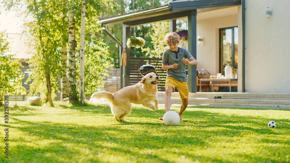 Fototapeta Handsome Young Boy Plays Soccer with Happy Golden Retriever Dog at the Backyard Lawn. He Plays Football and Has Lots of Fun with His Loyal Doggy Friend. Idyllic Summer House.