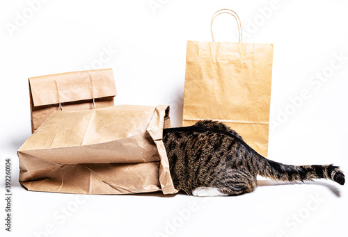 cat climbed into a craft bag on a white background. Shopping concept © alexmia