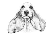 Spaniel Dog Head Hand Drawn Il...