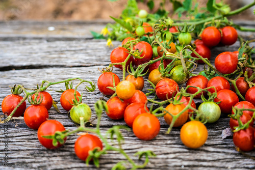 Fototapety, obrazy: Fresh red small tomato on wood table