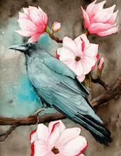 Watercolor Picture Of A Raven On The Magnolia Branches With Bright Pink Flowers