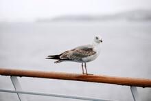 A Seagull Bird Sits On The Rai...