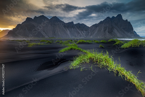 Fotomural Beautiful Grass Tussocks On The Black Beach Of Stokksnes In the Shadow Of Vestra