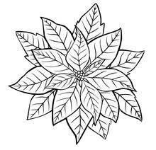 Poinsettia Flower. Contour Image Isolated On White Background.