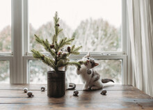 Kitten Christmas Tree