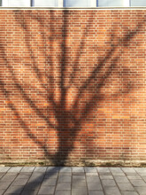 Shadow Of Tree On Brick Wall