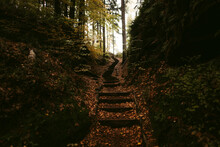 Old Wooden Path In Forest