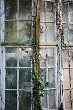 Derelict Glasshouse.