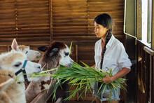 Woman Feeding Alpaca