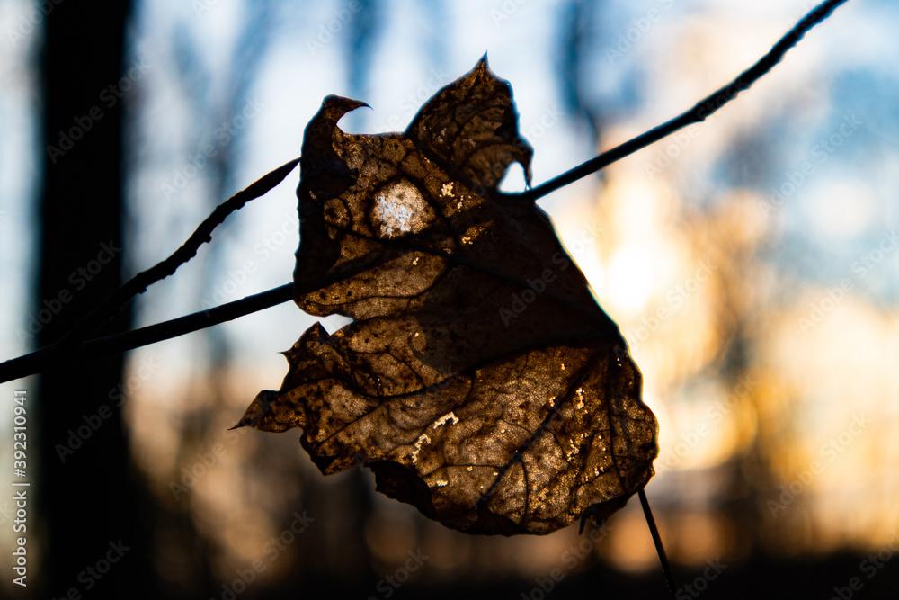 Fototapeta Liść na gałęzi w Powsinie