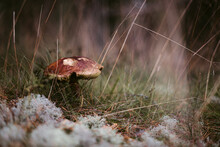 Mushroom In Forest In Autumn