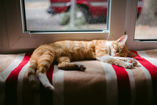 Cute Ginger Cat Resting By Win...