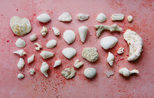 White Objects Found On The Shoreline.