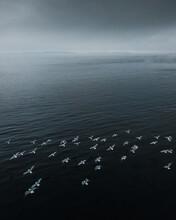 Birds Fly Over The Sea