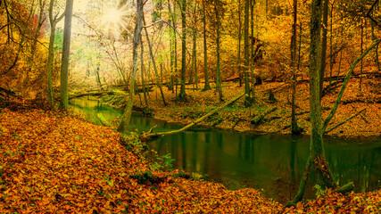 jesień nad rzeką Łyną na Warmii w północno-wschodniej Polsce
