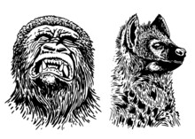 Graphical Portraits Of Gorilla...