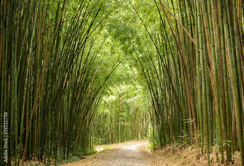 Fototapeta Pergola  bambusowa-sciezka
