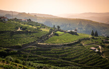 The Vineyards Of Douro Wine Region (DOC - Portuguese Quality Wine Scheme) On The Slopes Of Douro River Next To Mesao Frio, District Of Vila Real, Douro, Portugal