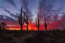 Arizona Desert Landscape At Sunset With Saguaro Cactus Silhouette