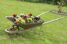 Old Wheelbarrow Repurposed As ...