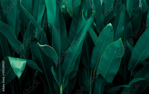 closeup nature view of tropical leaf background, dark tone concept Billede på lærred