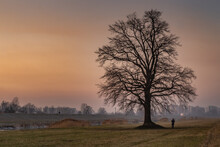Silhouette Shot Of A Man Standing Underneath A Leafless Tree During Sunset