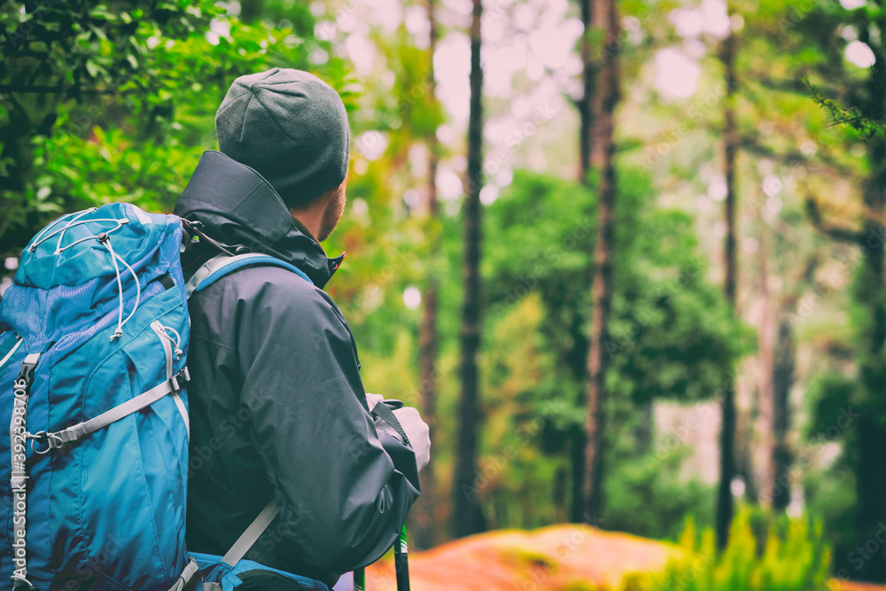 Fototapeta Travel hiking man hiker on trek hike with bag, hat, hiking poles. Active lifestyle people outdoor sports. Forest trail walking.