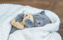 Kitten Sleeps Covered Warm Plaid And Hugs Favorite Toy Bear
