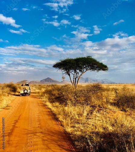 Fototapeta safari in the desert obraz na płótnie