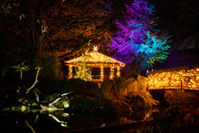 Garden With Christmas Lights A...