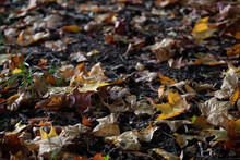 Autumn Colorful Leaves In The ...