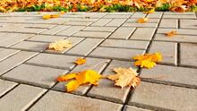 Fallen Yellow Autumn Maple Leaves At Sidewalk