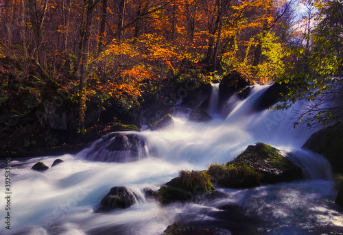 Mountain stream torrent Autumn leaves fall colors Canvas