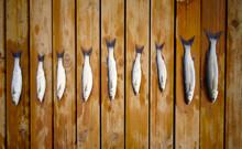 Peces En Fila Después De Pescar