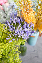 Eremurus Flowering Ornamental ...