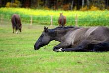 Pferdewelt. Schöne Pferde Auf Der Weide