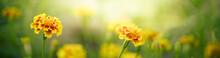 Nature Of Flower In Garden Usi...