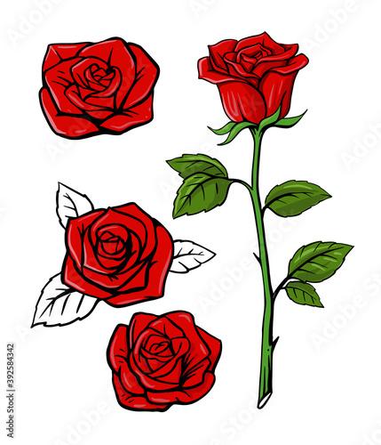 Fototapeta red rose set on white background with leaf obraz