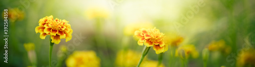 Fotografering Nature of flower in garden using as background natural cover page