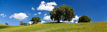 Landscape - Meadow, Blue Sky And Trees - Banner Image