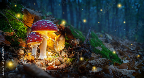 Fototapeta Mystical fly agarics glow in a mysterious dark forest. Fairytale background for Halloween. obraz