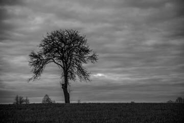 Drzewo czarno białe pole łąka niebo