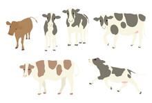 複数の牛のイラスト