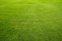 Close-up Of Green Grass Background