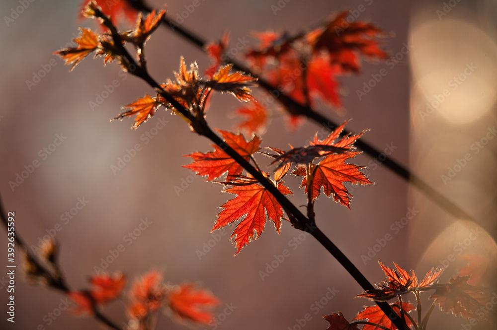 Fototapeta Autumn Time